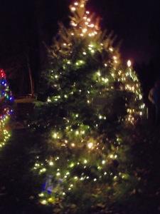 Christmas tree 2014 - lights